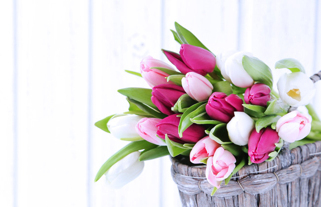 Bouquet of tulips from Shutterstock